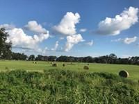 Crop / Farm Land, 64+ Acres : Mayo : Lafayette County : Florida