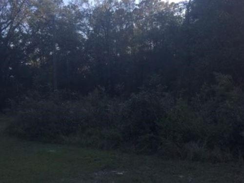 Recreational Lot Close to Suwannee : Mayo : Lafayette County : Florida
