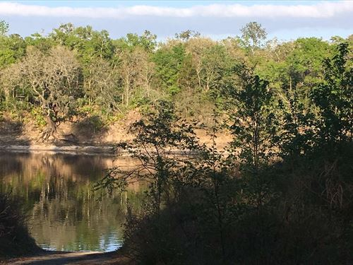Wooded Suwannee River Lot : Mayo : Lafayette County : Florida