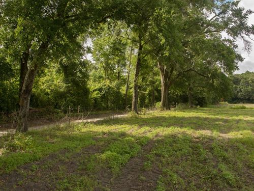 5 Private Acres Planted Pines North : Mayo : Lafayette County : Florida