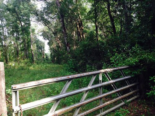 Prime Hunting Property For Sale : Monticello : Jefferson County : Florida