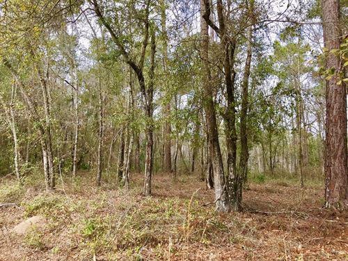 Homesite Trenton Gilchrist County : Trenton : Gilchrist County : Florida