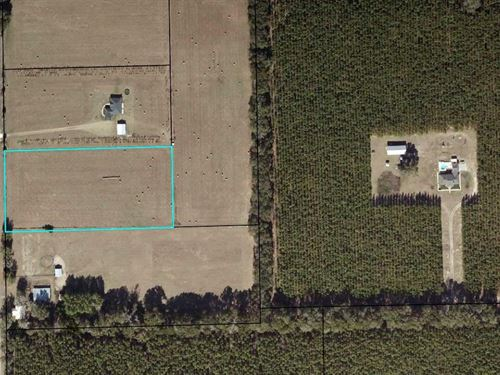 5 Beautiful Acres Trenton Gilchrist : Trenton : Gilchrist County : Florida