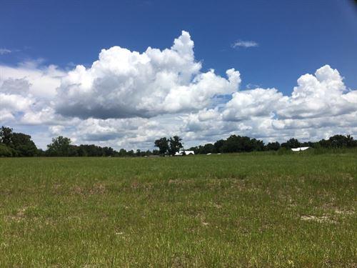 Build Your Dream Home, Mistletoe : Trenton : Gilchrist County : Florida