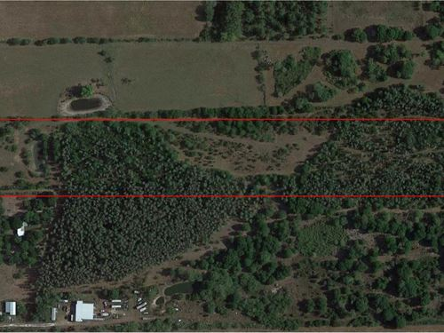 12 Acres For Sale Hardee County, Fl : Zolfo Springs : Hardee County : Florida
