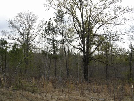 Dividable Wooded 80.5 Acres : Eatonton : Putnam County : Georgia