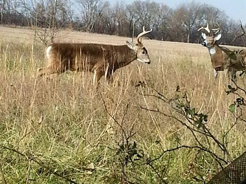 Exceptional Hunting Land : Elsmore : Allen County : Kansas