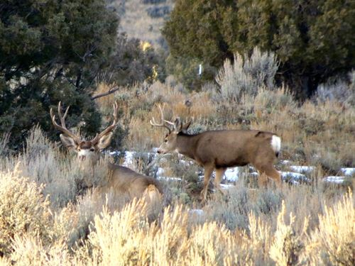 Pinon Hills Ranch Lot 39 : Pagosa Springs : Archuleta County : Colorado