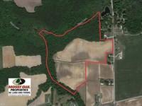 43 Acres of Farm And Timber Land : Lucama : Wilson County : North Carolina