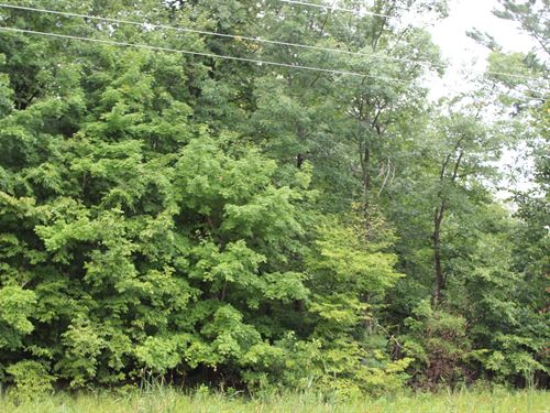 Heavily Wooded Parcel Foley : Foley : Benton County : Minnesota