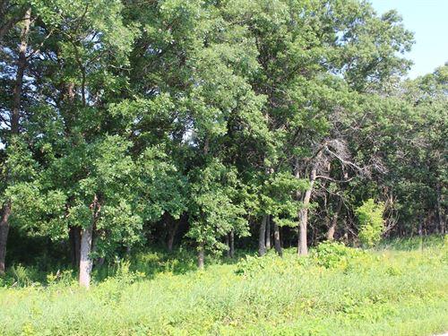 Heavy Wooded Acreage Zimmerman : Zimmerman : Sherburne County : Minnesota