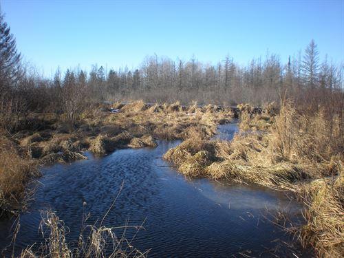 River Property, 80 Acres, Trails : Moose Lake : Carlton County : Minnesota