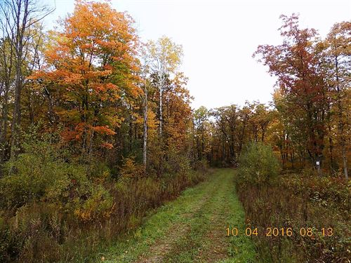 Wooded Building Lot Subdivision : Sandstone : Pine County : Minnesota