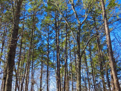 Land For Sale in The Ozarks : Alton : Oregon County : Missouri
