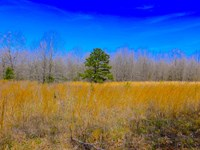 Recreational Acreage : Alton : Oregon County : Missouri