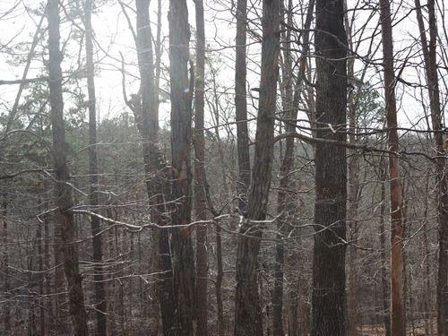 Timber / Hunting Property Missouri : Ava : Douglas County : Missouri