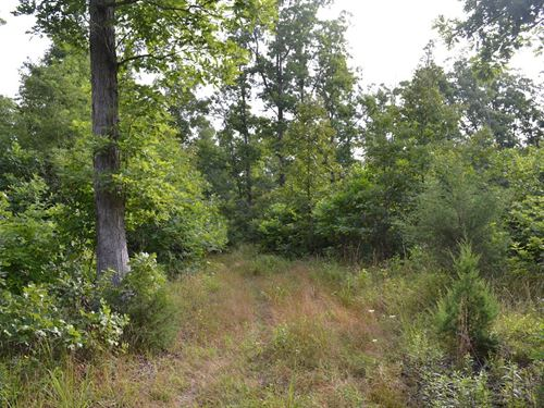 Hunting Land, Timber, Investment : Birch Tree : Shannon County : Missouri