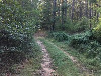 Land Southern Mo, Owner Financing : Birch Tree : Shannon County : Missouri
