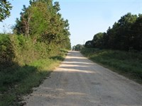 Southern Missouri Land Birch Tree : Birch Tree : Shannon County : Missouri