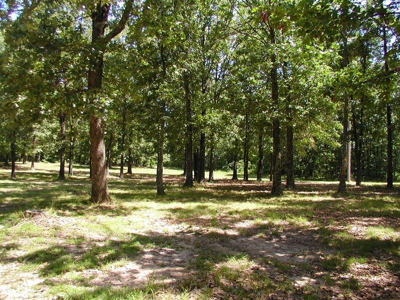 Surveyed Acreage Seller Finance : Birch Tree : Shannon County : Missouri