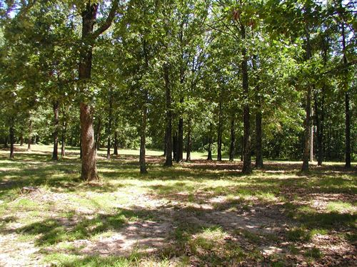 Surveyed Acreage Seller Finance : Birch Tree : Shannon County : Missouri