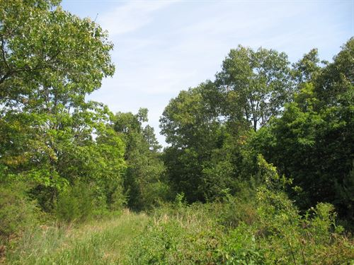 Wooded Acreage Seller Finance : Birch Tree : Shannon County : Missouri
