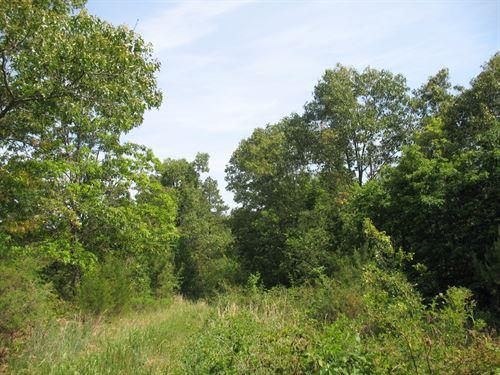 Surveyed Land Missouri Ozarks : Birch Tree : Shannon County : Missouri