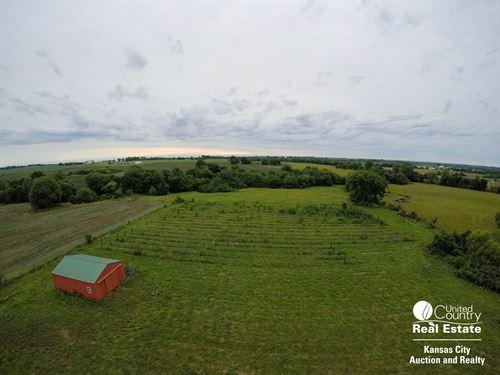 Vineyard Acreage Centerview : Centerview : Johnson County : Missouri