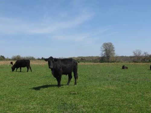 150 Acres of Good Pasture : Collins : Saint Clair County : Missouri