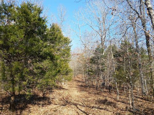 Southeast Missouri Hunting Land : Gatewood : Ripley County : Missouri