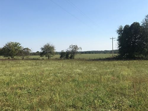 Land, Farm, Investment : Hartville : Wright County : Missouri