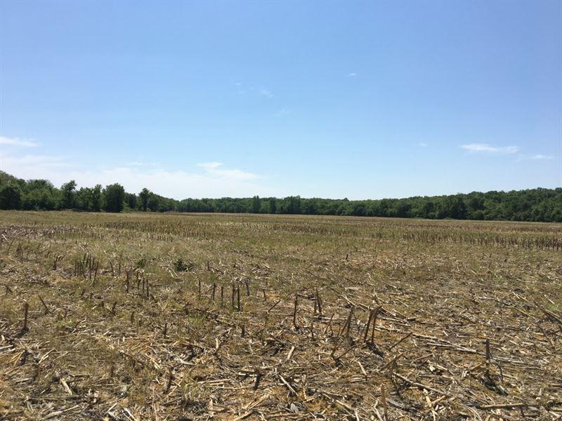 383 Acres, 4 Roi, Highly Tillable : Pattonsburg : Daviess County : Missouri