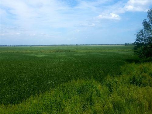 Tillable Row Crop Farm North : New Cambria : Chariton County : Missouri