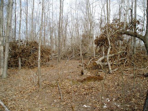 Secluded Hunting Ground Southeast : Silva : Wayne County : Missouri