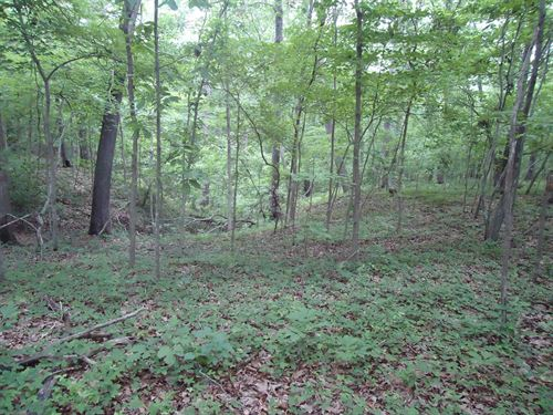 5 Acres Missouri Hunting Land Lake : Stover : Morgan County : Missouri