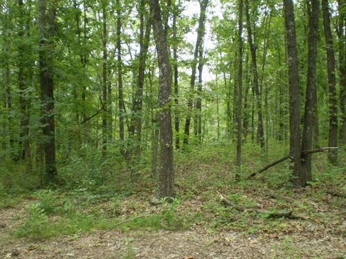 Recreational, Hunting Country Home : Stover : Morgan County : Missouri