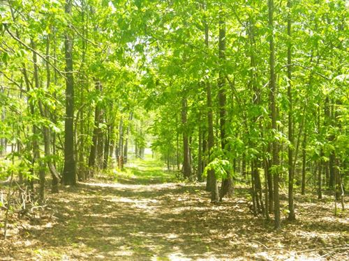Land, 60 Acres, Building Sites : West Plains : Howell County : Missouri