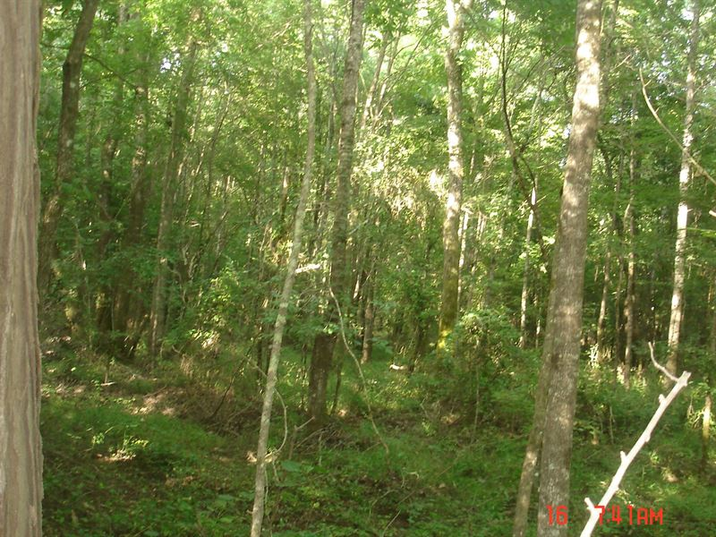 40 Acres in Choctaw County, MS : Ackerman : Choctaw County : Mississippi