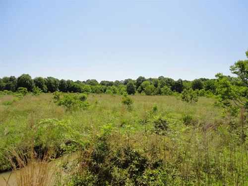 Land 24 Acres Scott County Forest : Forest : Scott County : Mississippi