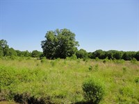 Land 15 Acres Scott County Forest : Forest : Scott County : Mississippi