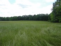 Land 13 Acres Scott County Forest : Forest : Scott County : Mississippi
