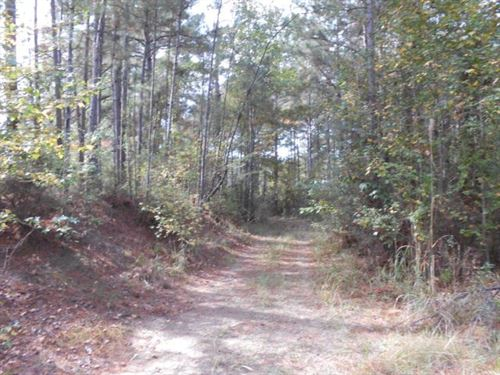 40 Acres Amite County MS Hunting : Gloster : Amite County : Mississippi