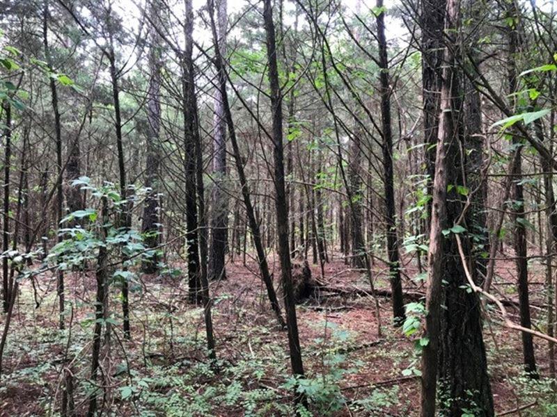 Land, Camps Airport Rd, Starkville : Starkville : Oktibbeha County : Mississippi