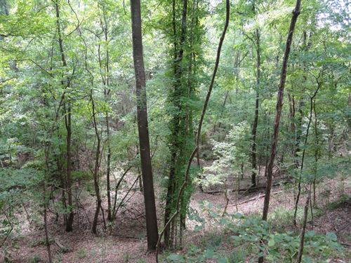 Hunting Land Homochitto National : Union Church : Lincoln County : Mississippi