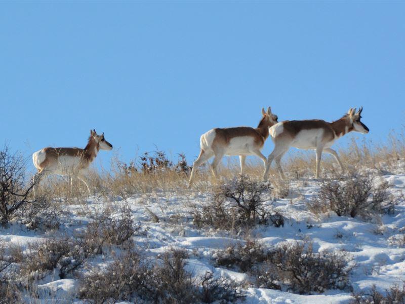 Montana Ranch Land For Sale : Drummond : Granite County : Montana