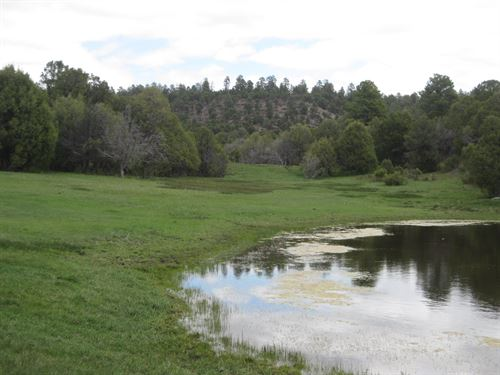 100 Ac./National Forest Boundary/3 : Abiquiu : Rio Arriba County : New Mexico