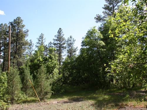 Land Fro Sale Located Below Brazos : Chama : Rio Arriba County : New Mexico