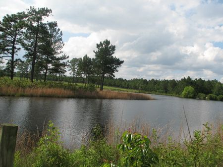 252+/- Acres Pasture, Pond, Timber : Metter : Candler County : Georgia
