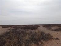 80 Acres Southeast Desert Luna : Deming : Luna County : New Mexico