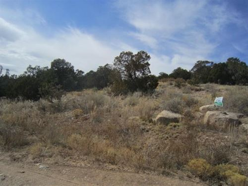 Edgewood NM 1 Acre Residential Lot : Edgewood : Torrance County : New Mexico